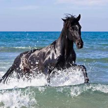 Black Stallion on the beach
