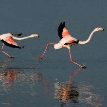 Flamingos & Birdlife